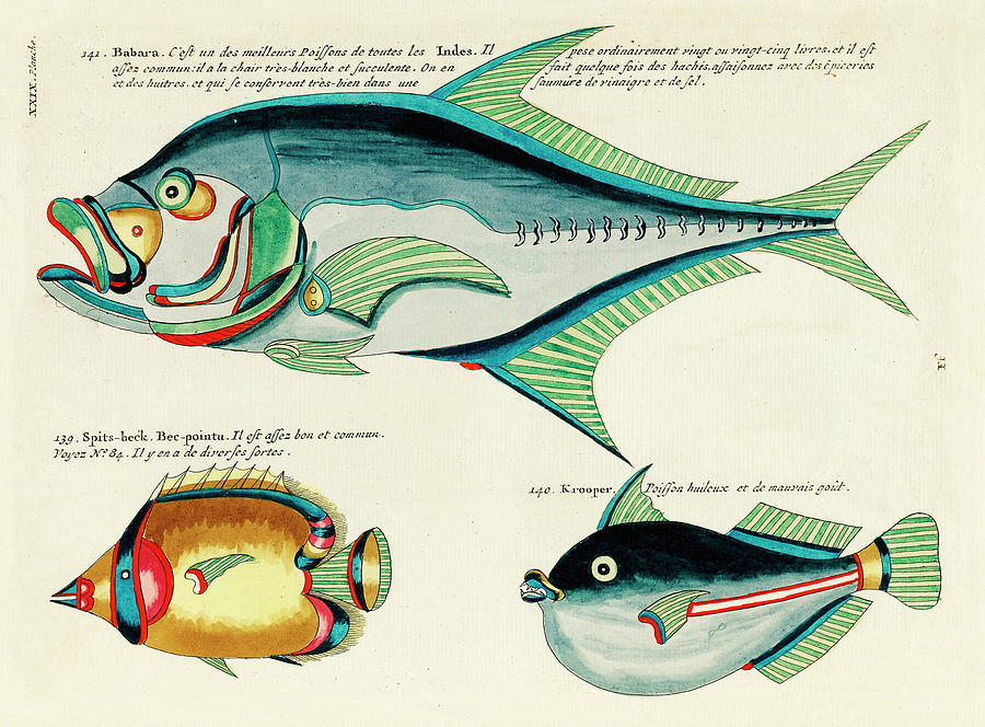 Vintage, Whimsical Fish And Marine Life Illustration By Louis Renard - Babara, Spits-beck, Krooper Digital Art