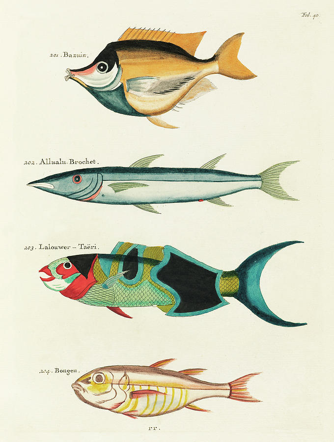 Vintage, Whimsical Fish And Marine Life Illustration By Louis Renard - Bazuin, Allualu Brochet Digital Art