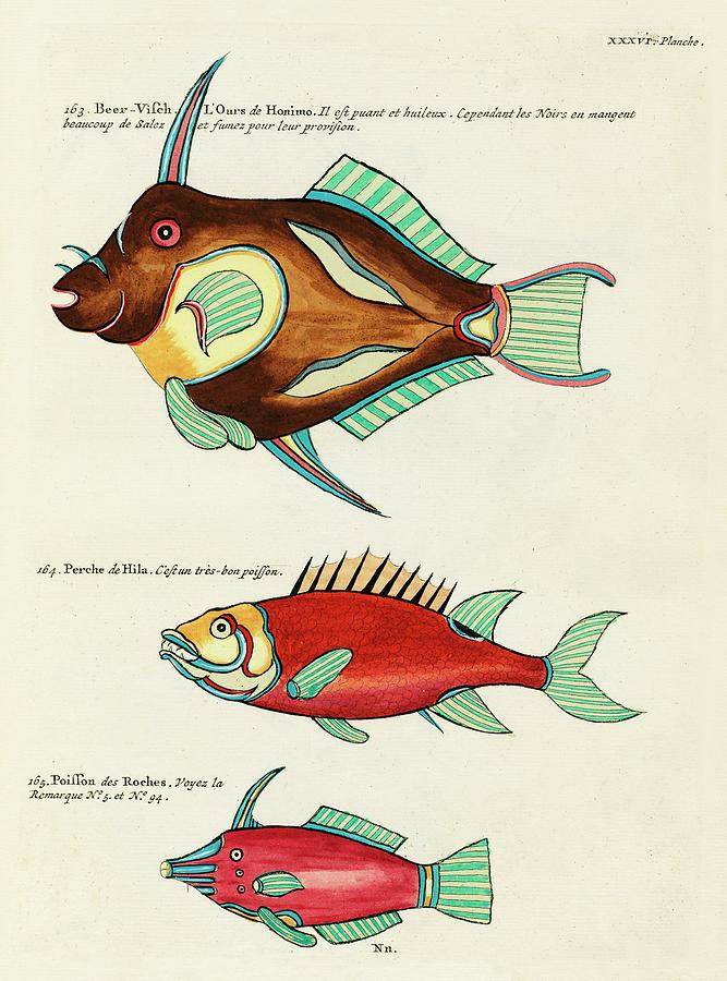Vintage, Whimsical Fish And Marine Life Illustration By Louis Renard - Bear Fish, Poisson De Roches Digital Art