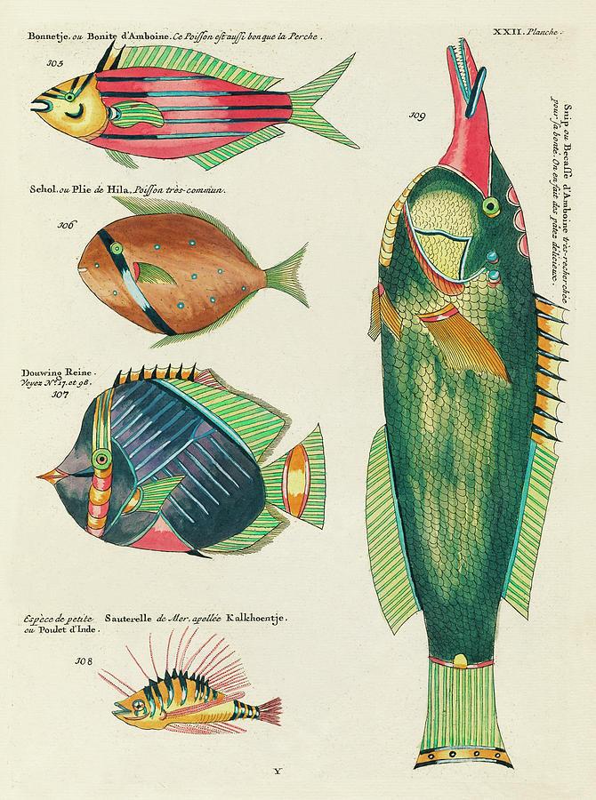 Vintage, Whimsical Fish And Marine Life Illustration By Louis Renard - Bonite, Plie, Snip, Douwing Digital Art