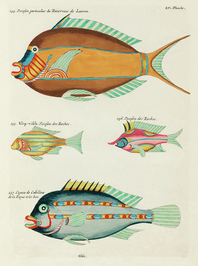 Vintage, Whimsical Fish And Marine Life Illustration By Louis Renard - Cod Fish, Klip Visch Digital Art