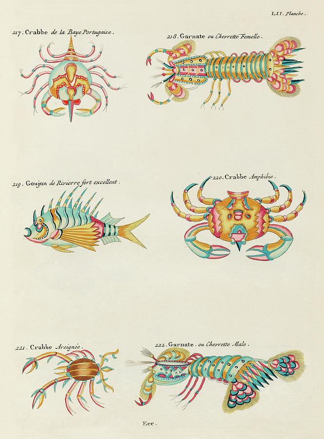 Vintage, Whimsical Fish And Marine Life Illustration By Louis Renard - Crabbe, Goujon, Garnate Digital Art