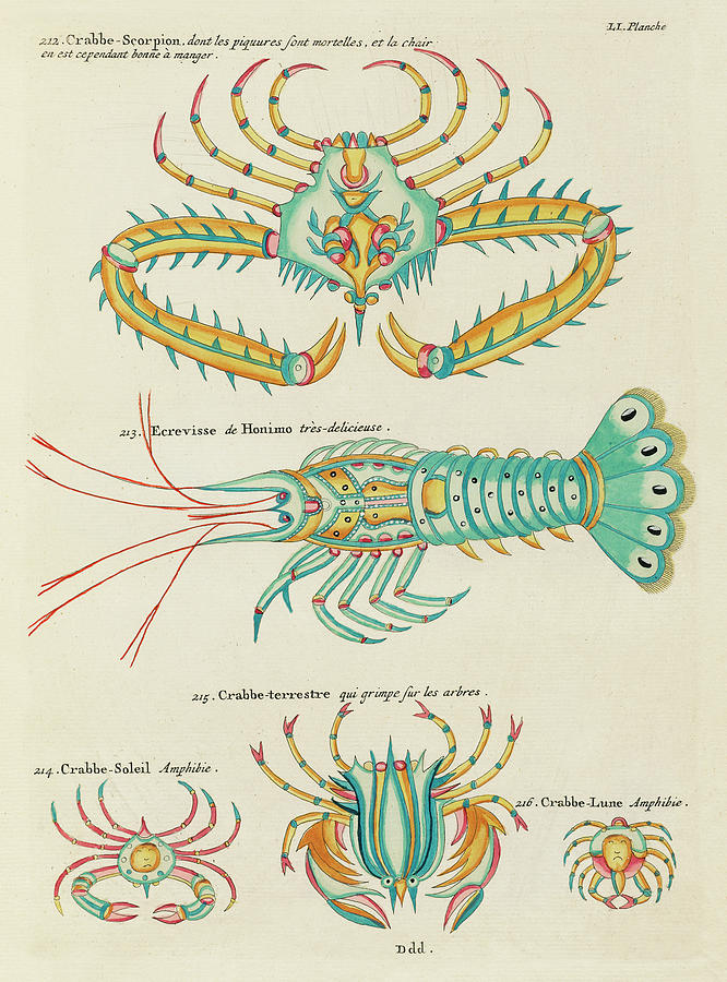Vintage, Whimsical Fish And Marine Life Illustration By Louis Renard - Crabbe Scorpion, Crab, Shrimp Digital Art