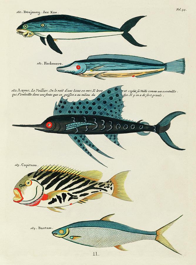 Vintage, Whimsical Fish And Marine Life Illustration By Louis Renard - Doujoung, Fockenero, Capitano Digital Art