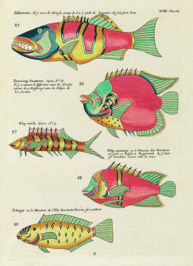 Vintage, Whimsical Fish And Marine Life Illustration By Louis Renard - Douwing Comtesse, Alforeese Digital Art