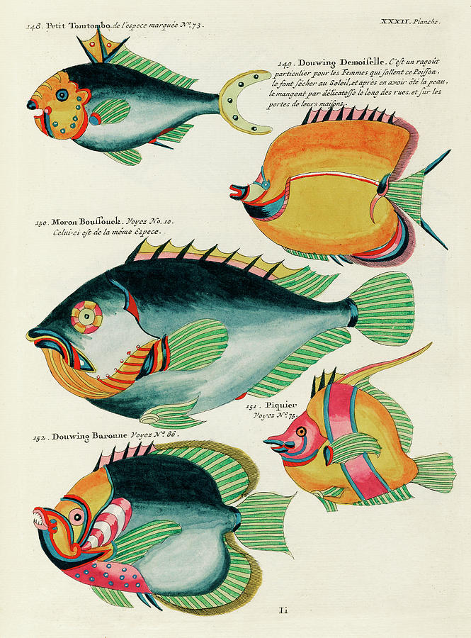 Vintage, Whimsical Fish And Marine Life Illustration By Louis Renard - Douwing Demoiselle, Tomtombo Digital Art