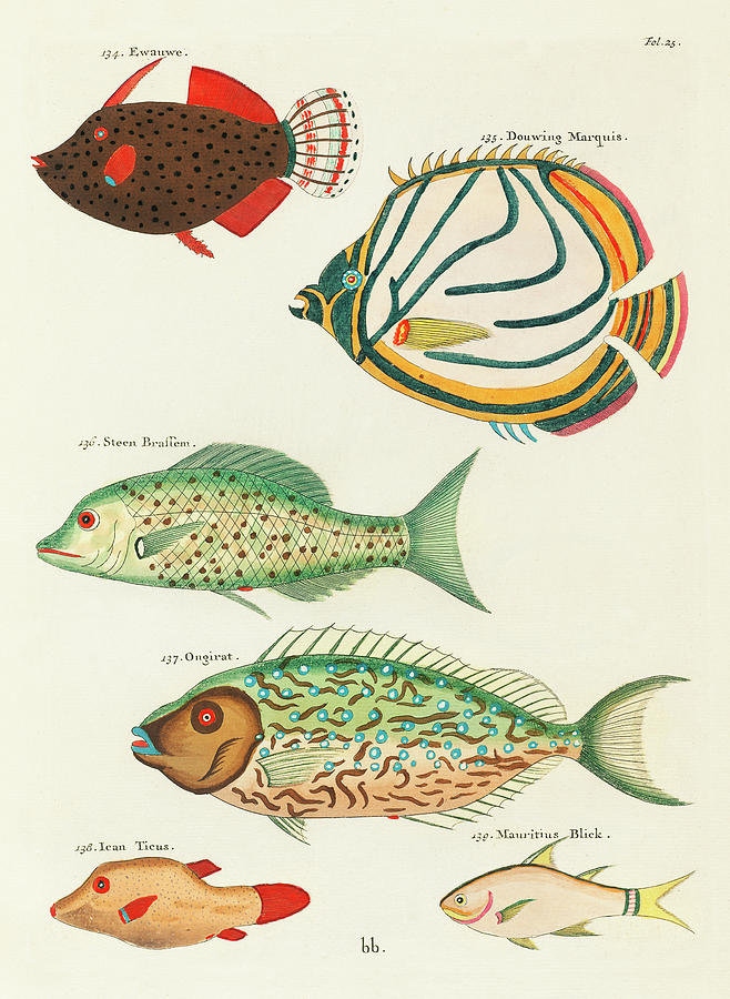 Vintage, Whimsical Fish And Marine Life Illustration By Louis Renard - Douwing Marquis, Stone Bream Digital Art