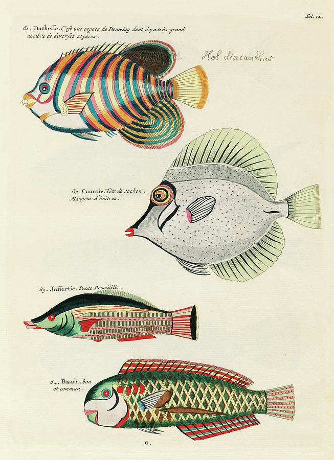 Vintage, Whimsical Fish And Marine Life Illustration By Louis Renard - Duchesse, Caantie, Banda Digital Art