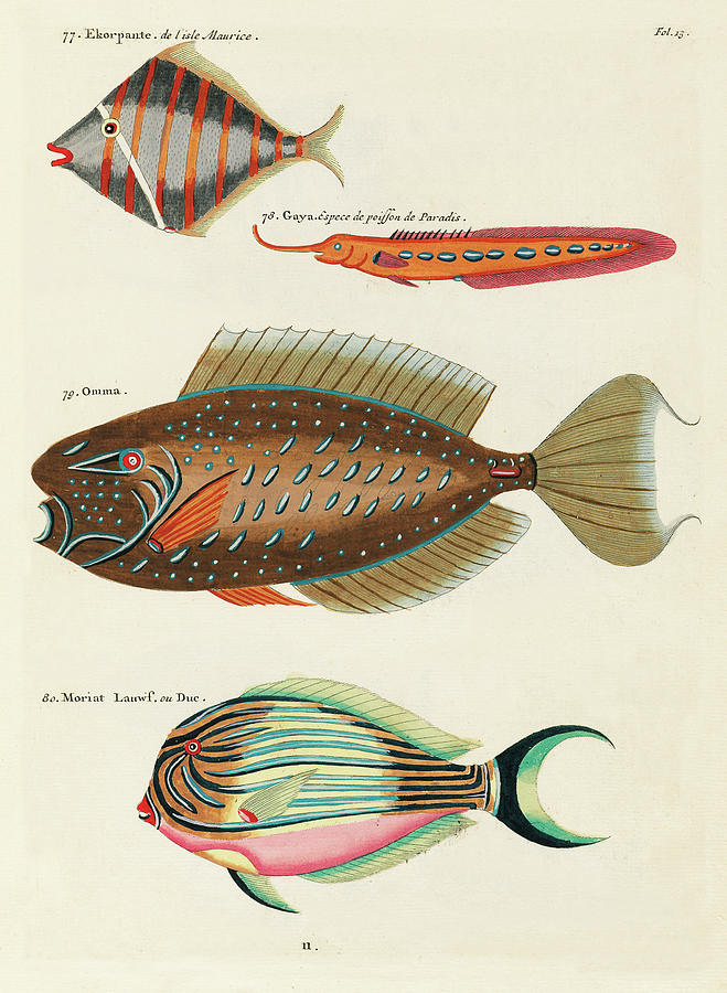 Vintage, Whimsical Fish And Marine Life Illustration By Louis Renard - Ekorpante, Gaya, Omma, Duc Digital Art