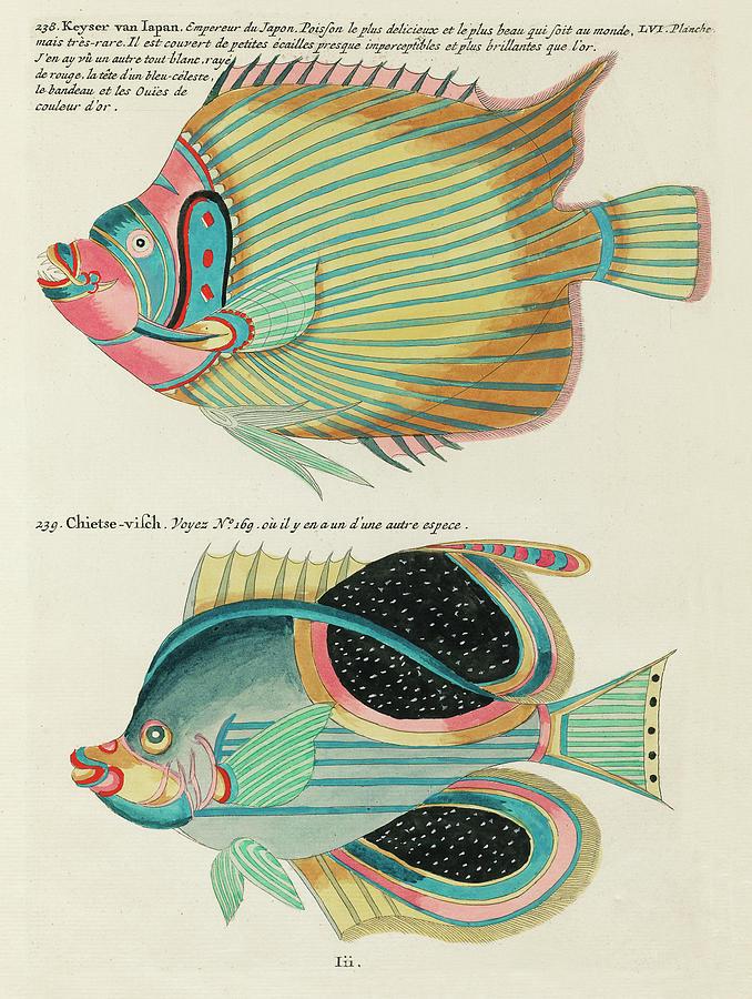 Vintage, Whimsical Fish And Marine Life Illustration By Louis Renard - Empereur Du Japon, Chietse Digital Art