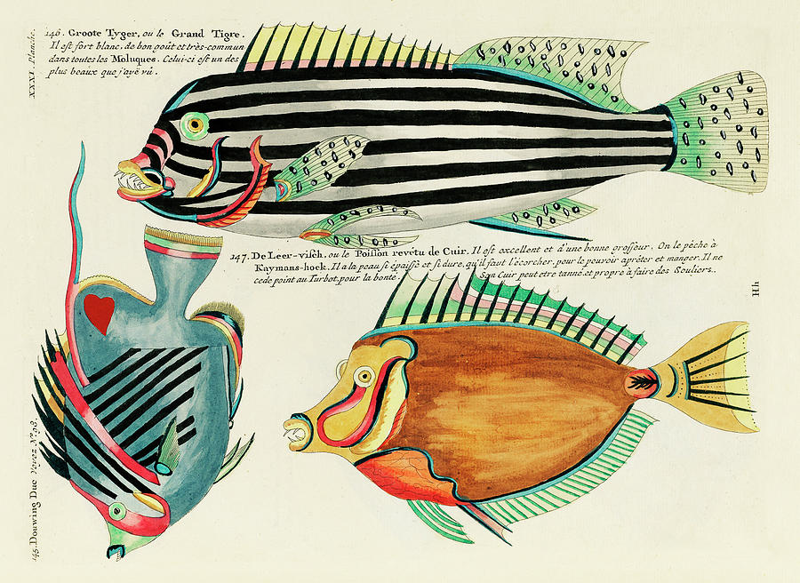 Vintage, Whimsical Fish And Marine Life Illustration By Louis Renard - Grand Tigre, Douwing Duke Digital Art