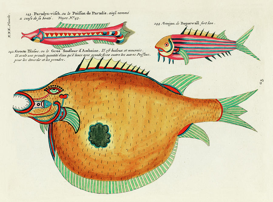 Vintage, Whimsical Fish And Marine Life Illustration By Louis Renard - Groote Blaser, Paradys Visch Digital Art