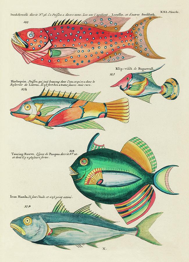 Vintage, Whimsical Fish And Marine Life Illustration By Louis Renard - Iacob Everse, Harlequin Digital Art