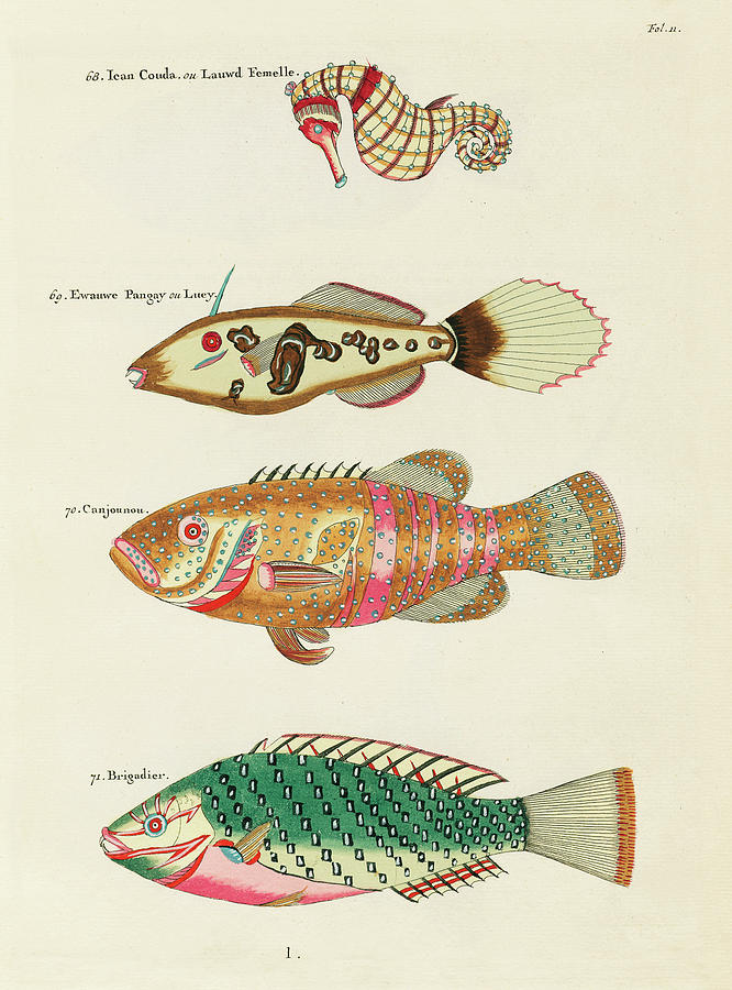Vintage, Whimsical Fish And Marine Life Illustration By Louis Renard - Ican Couda, Canjounou Digital Art