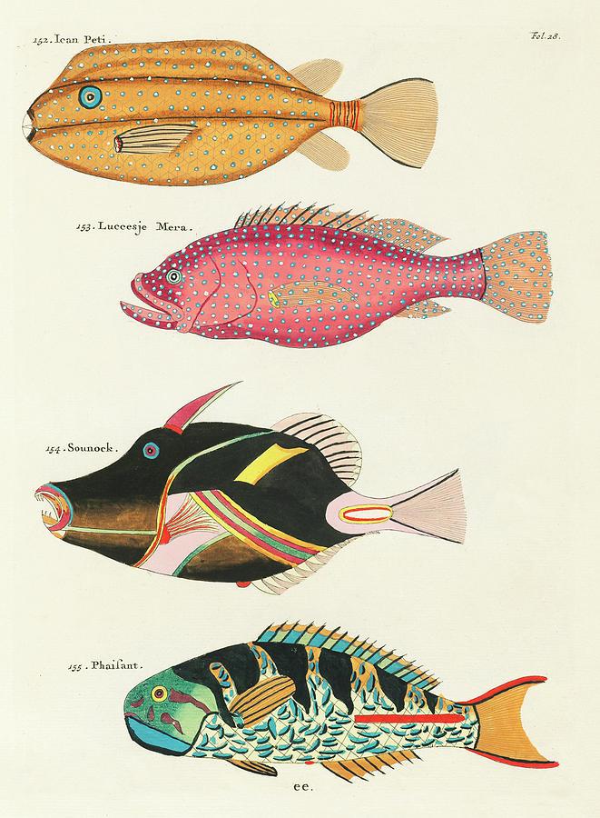Vintage, Whimsical Fish And Marine Life Illustration By Louis Renard - Ican Peti, Sounock, Pheasant Digital Art