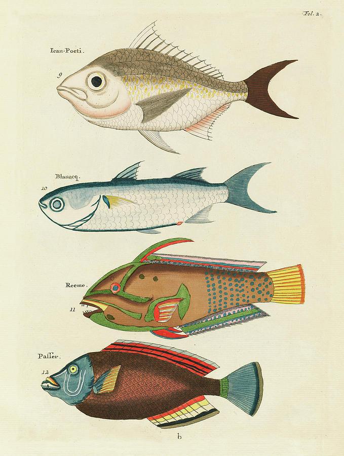 Vintage, Whimsical Fish And Marine Life Illustration By Louis Renard - Ican Poeti, Blanacq, Reeme Digital Art