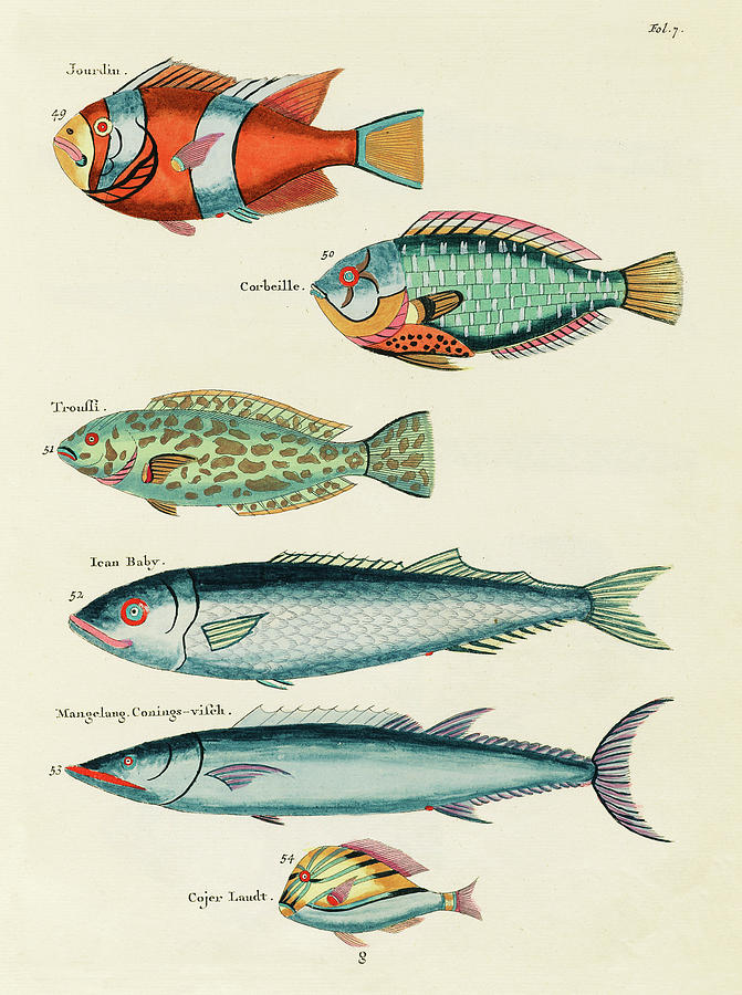 Vintage, Whimsical Fish And Marine Life Illustration By Louis Renard - Jourdin, Corbeille, Ican Baby Digital Art