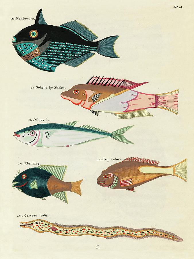 Vintage, Whimsical Fish And Marine Life Illustration By Louis Renard - Kandawaar, Schout, Makreel Digital Art