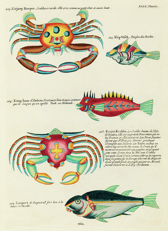 Vintage, Whimsical Fish And Marine Life Illustration By Louis Renard - Katjang Roeper, Kruys Krabbe Digital Art