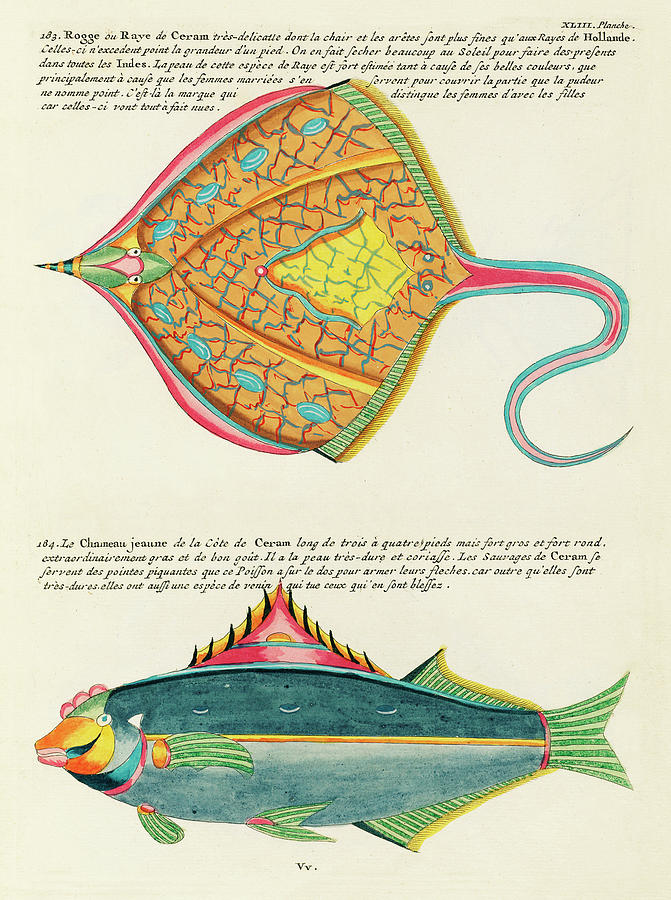 Vintage, Whimsical Fish And Marine Life Illustration By Louis Renard - Le Chameau Jeaune, Ray Fish Digital Art