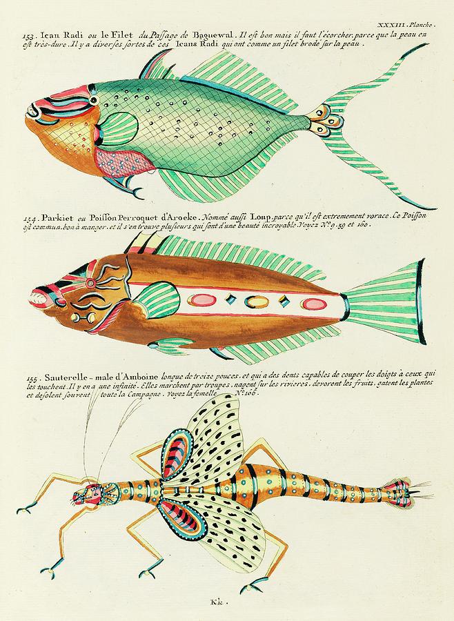 Vintage, Whimsical Fish And Marine Life Illustration By Louis Renard - Le Filet, Sauterelle, Parkiet Digital Art