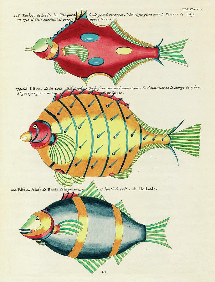 Vintage, Whimsical Fish And Marine Life Illustration By Louis Renard - Lemon Fish, Red Turbot Digital Art