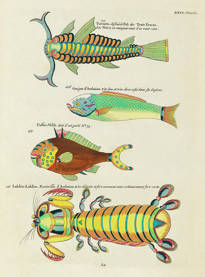 Vintage, Whimsical Fish And Marine Life Illustration By Louis Renard - Lokkie Lokkie, Tamaota Digital Art
