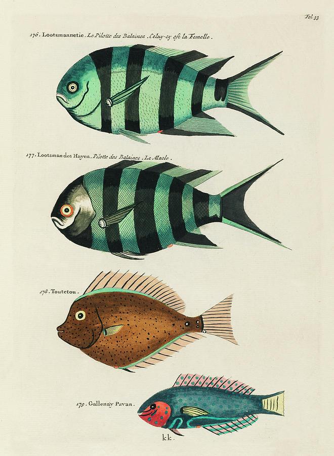 Vintage, Whimsical Fish And Marine Life Illustration By Louis Renard - Lootsmannetie, Toutetou Digital Art