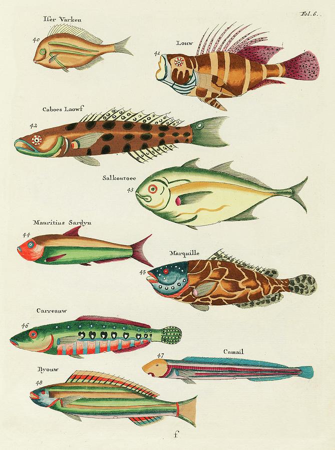 Vintage, Whimsical Fish And Marine Life Illustration By Louis Renard - Louw, Caboes, Salkoutoec Digital Art