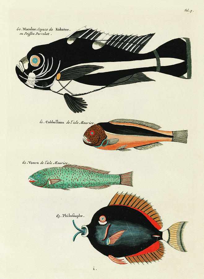 Vintage, Whimsical Fish And Marine Life Illustration By Louis Renard - Macolor, Kakatoe, Voorn Digital Art