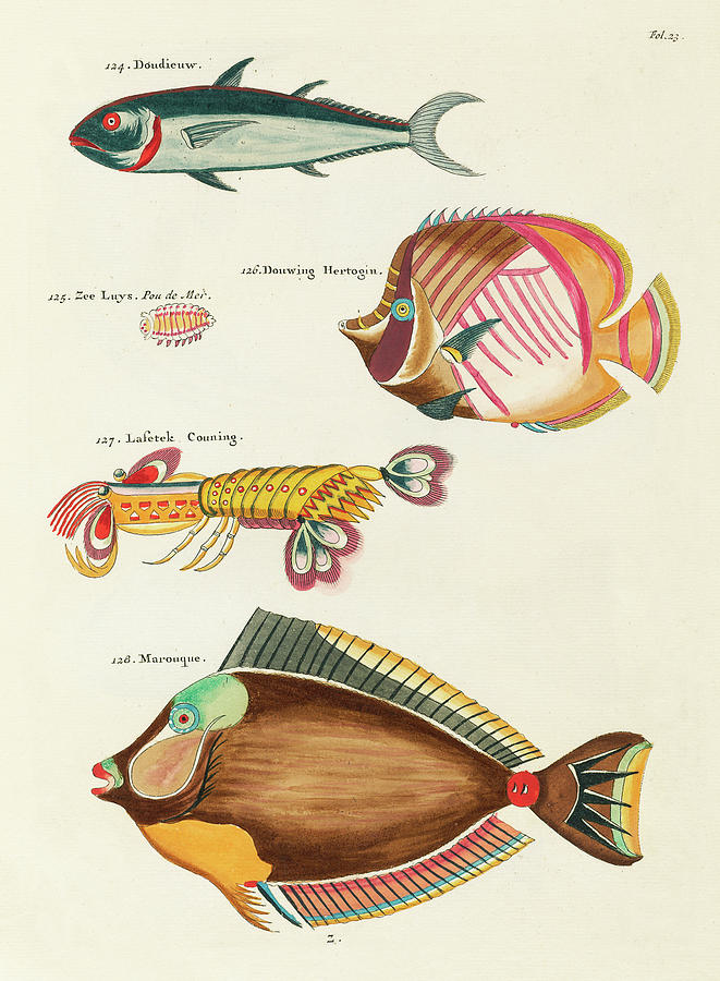 Vintage, Whimsical Fish And Marine Life Illustration By Louis Renard - Marouque, Doudieuw Digital Art