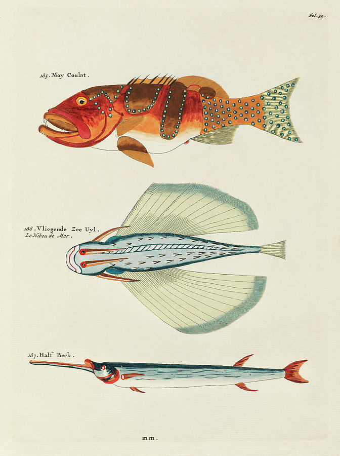 Vintage, Whimsical Fish And Marine Life Illustration By Louis Renard - May Coulat, Vliegende Zee Uyl Digital Art
