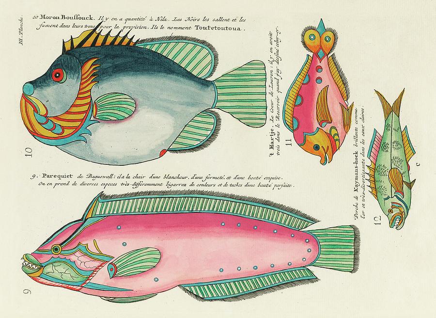 Vintage, Whimsical Fish And Marine Life Illustration By Louis Renard - Moron Boussouck, Parequiet Digital Art