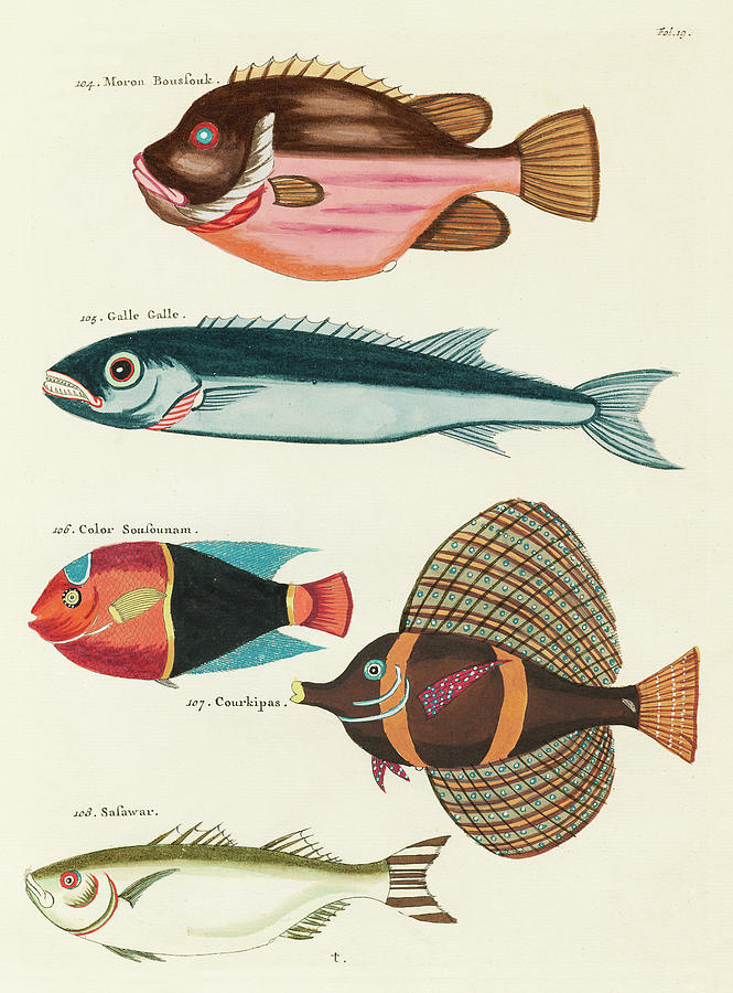 Vintage, Whimsical Fish And Marine Life Illustration By Louis Renard - Moron Boussouk, Galle Galle Digital Art