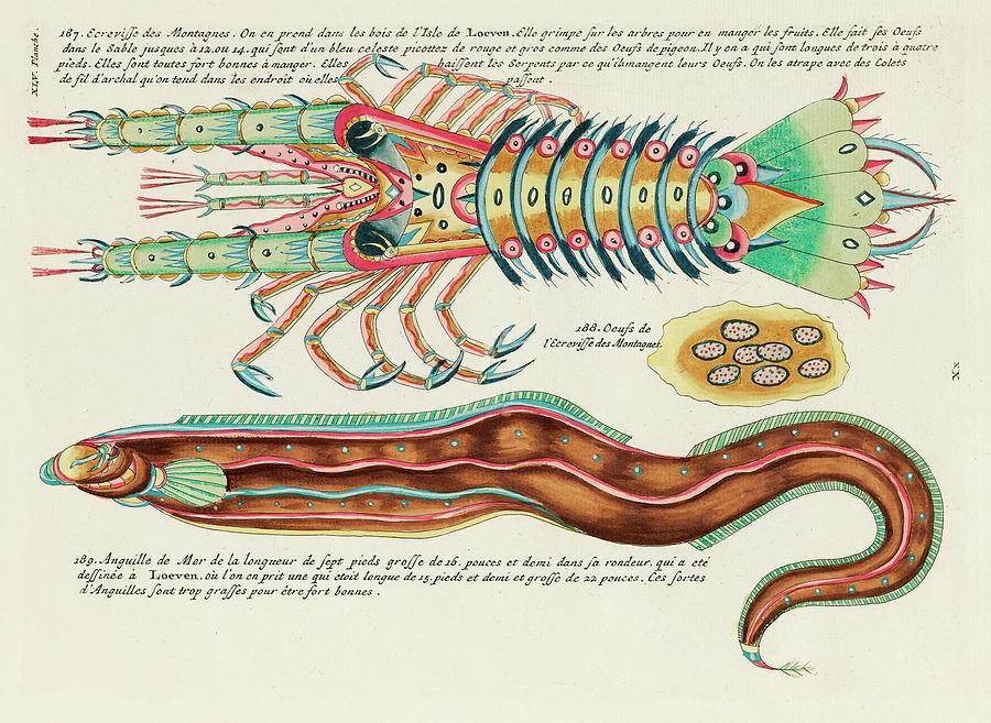 Vintage, Whimsical Fish And Marine Life Illustration By Louis Renard - Mountain Crayfish, Sea Eel Digital Art