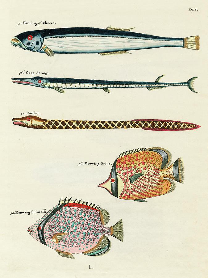 Vintage, Whimsical Fish And Marine Life Illustration By Louis Renard - Parring, Geep Serooy, Cambat Digital Art