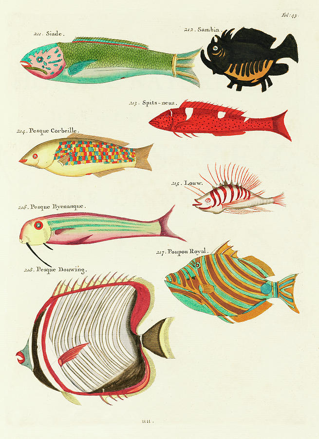 Vintage, Whimsical Fish And Marine Life Illustration By Louis Renard - Pesque Douwing, Poupou Royal Digital Art