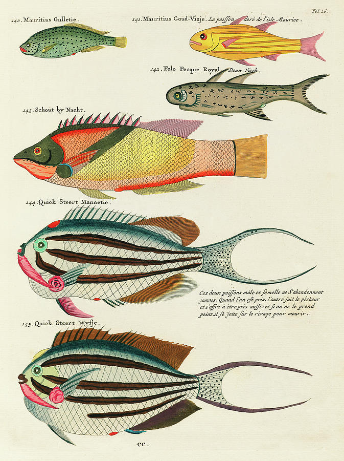 Vintage, Whimsical Fish And Marine Life Illustration By Louis Renard - Quick Steert, Schout By Nacht Digital Art