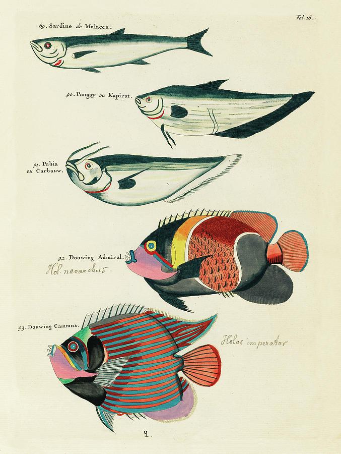 Vintage, Whimsical Fish And Marine Life Illustration By Louis Renard - Sardine, Douwing Admiral Digital Art