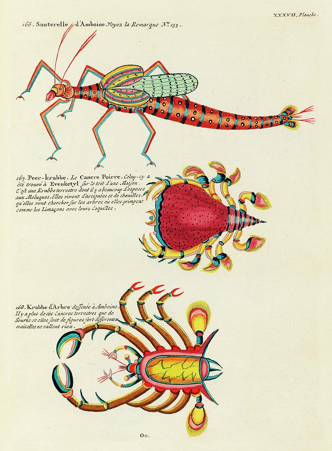 Vintage, Whimsical Fish And Marine Life Illustration By Louis Renard - Sauterelle, Peer Krabbe Digital Art