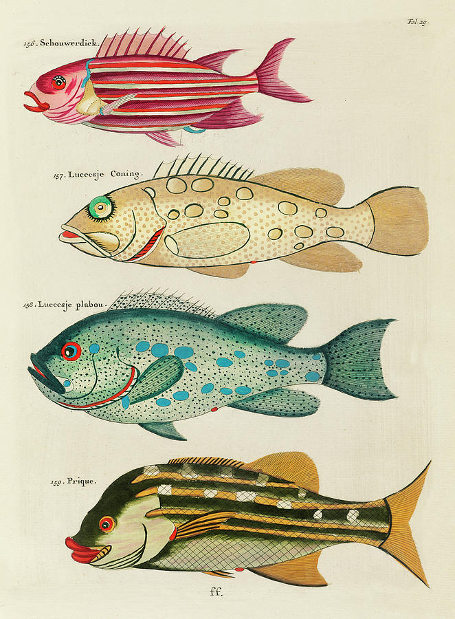 Vintage, Whimsical Fish And Marine Life Illustration By Louis Renard - Schouwerdick, Prique Digital Art