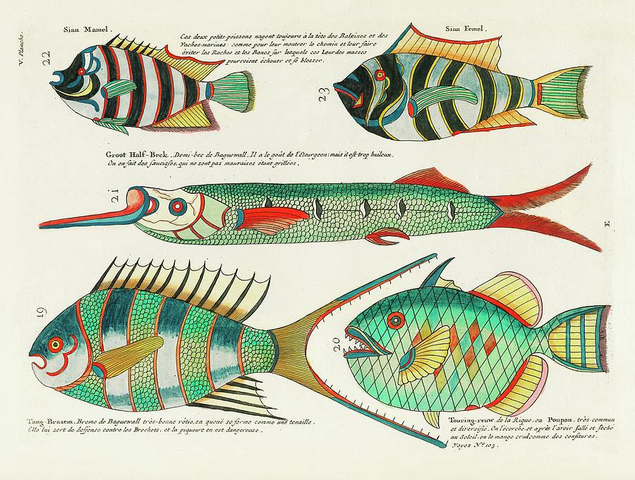 Vintage, Whimsical Fish And Marine Life Illustration By Louis Renard - Sian Mamel, Sian Femel Digital Art