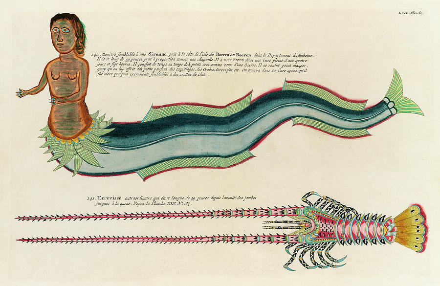 Vintage, Whimsical Fish And Marine Life Illustration By Louis Renard - Sirenne, Mermaid, Ecrevisse Digital Art