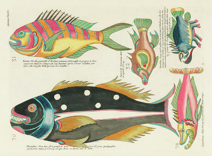 Vintage, Whimsical Fish And Marine Life Illustration By Louis Renard - Sosor, Macolor, Snavelaar Digital Art