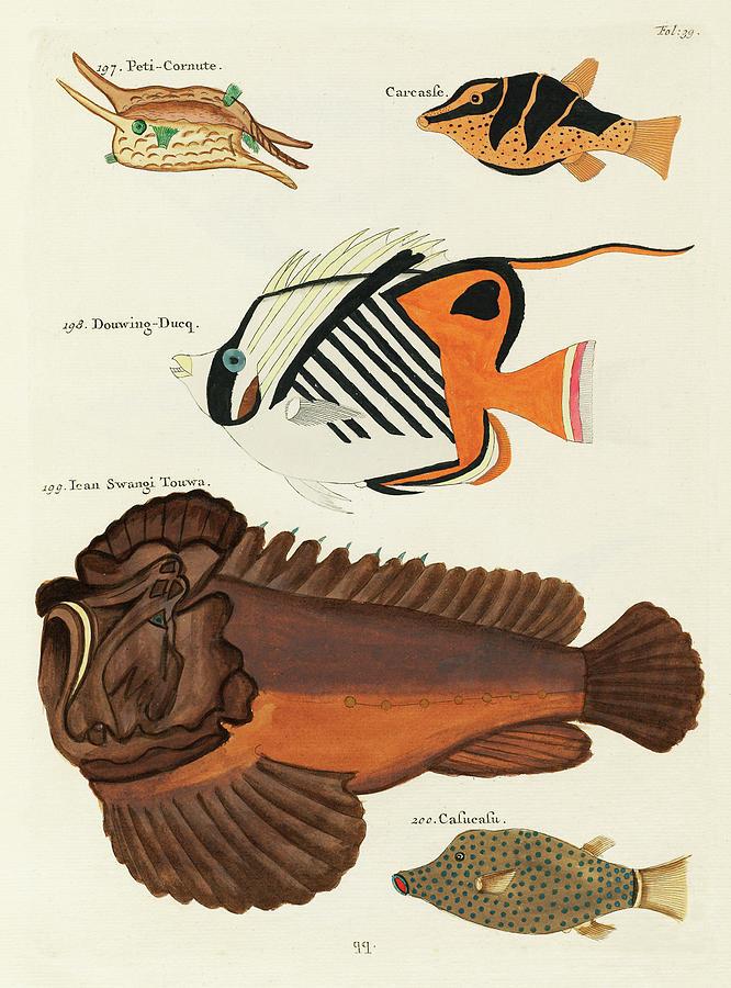 Vintage, Whimsical Fish And Marine Life Illustration By Louis Renard - Swangi Touwa, Douwing Duke Digital Art