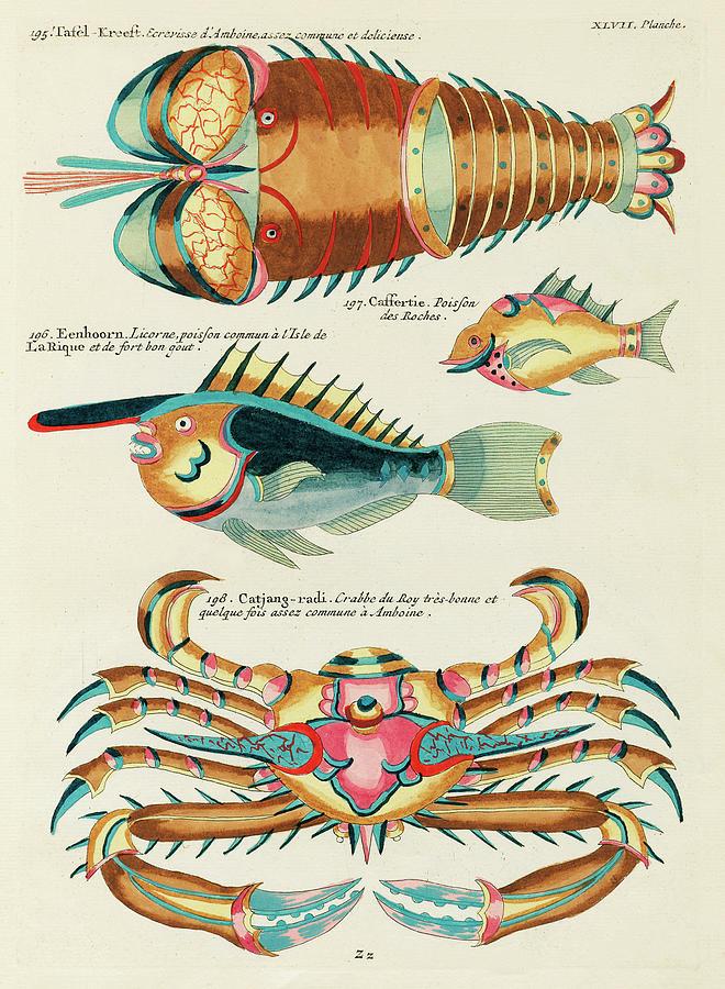 Vintage, Whimsical Fish And Marine Life Illustration By Louis Renard - Tafel Kreeft, Catjang Radi Digital Art