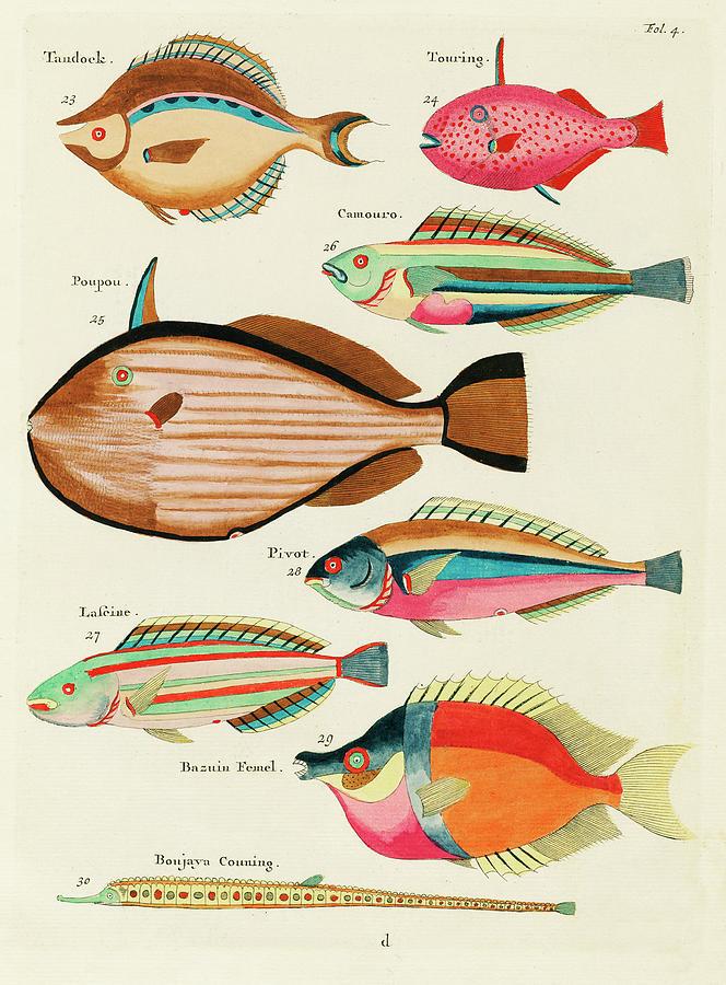 Vintage, Whimsical Fish And Marine Life Illustration By Louis Renard - Tandock, Touring, Poupou Digital Art