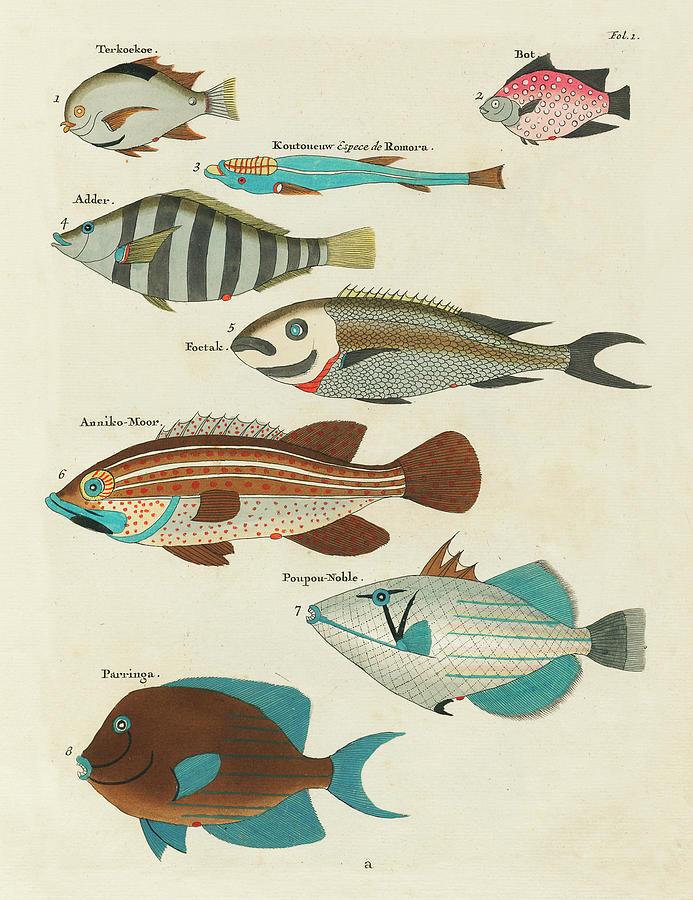 Vintage, Whimsical Fish And Marine Life Illustration By Louis Renard - Terkoekoe, Parringa, Poupou Mixed Media