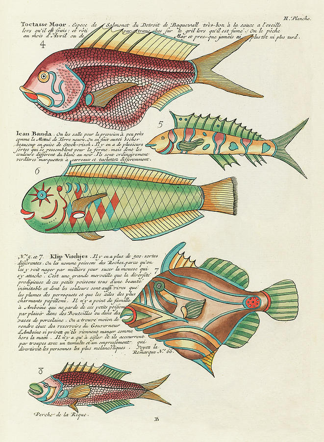 Vintage, Whimsical Fish And Marine Life Illustration By Louis Renard - Toctasse Moor, Ican Banda Digital Art
