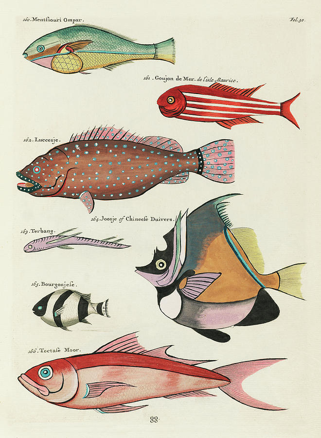 Vintage, Whimsical Fish And Marine Life Illustration By Louis Renard - Toctasse Moor, Joosje, Goujon Digital Art